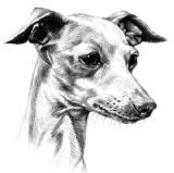 Italian Greyhound Puppy Receipt Book